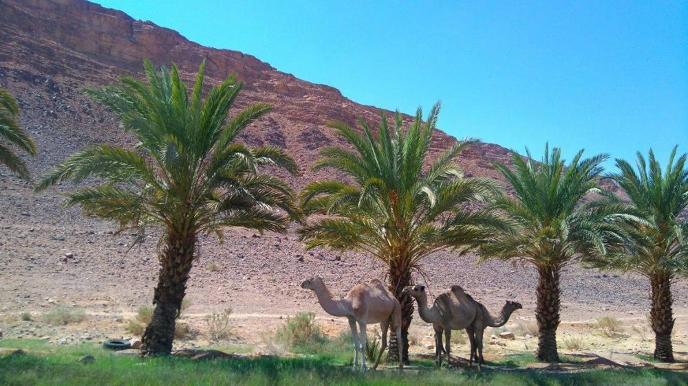wadi53.jpg